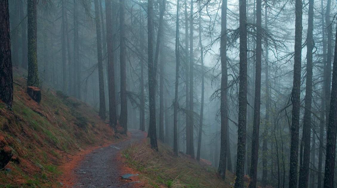bosque-y-bruma